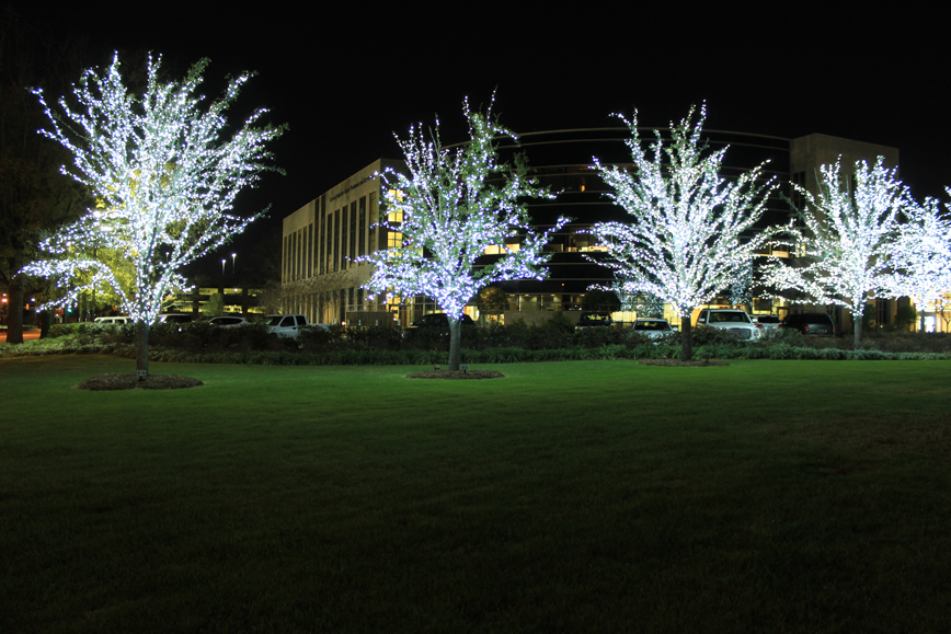 32nd Annual McLeod Hospice Tree Lighting Ceremony Set for December 7 - McLeod Health : hospice tree lighting ceremony - www.canuckmediamonitor.org